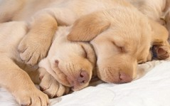 Sleeping puppies / 1920x1200