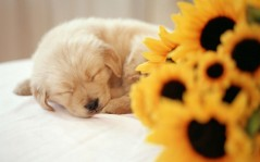Sleeping puppy / 1920x1200