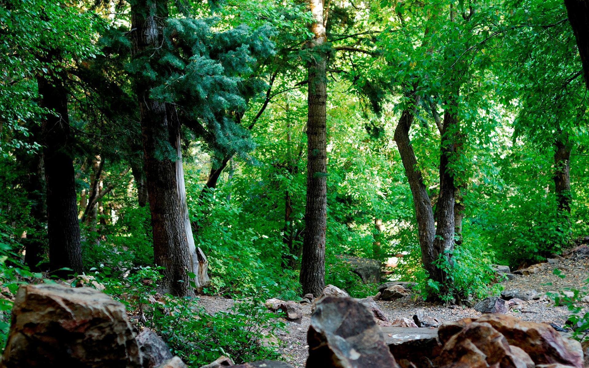 Обои в лесу вечером красивые лесной