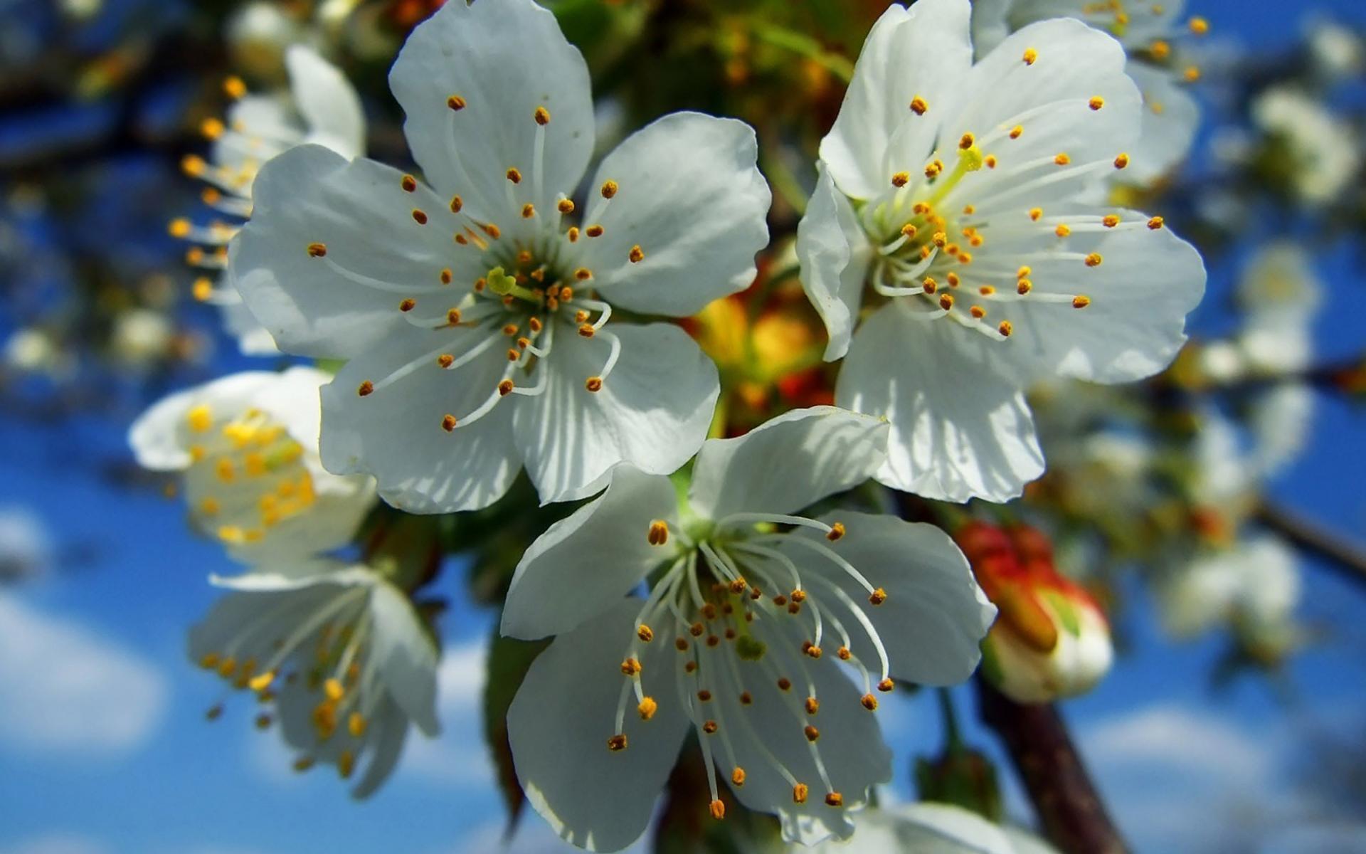 Картинки на тему весну