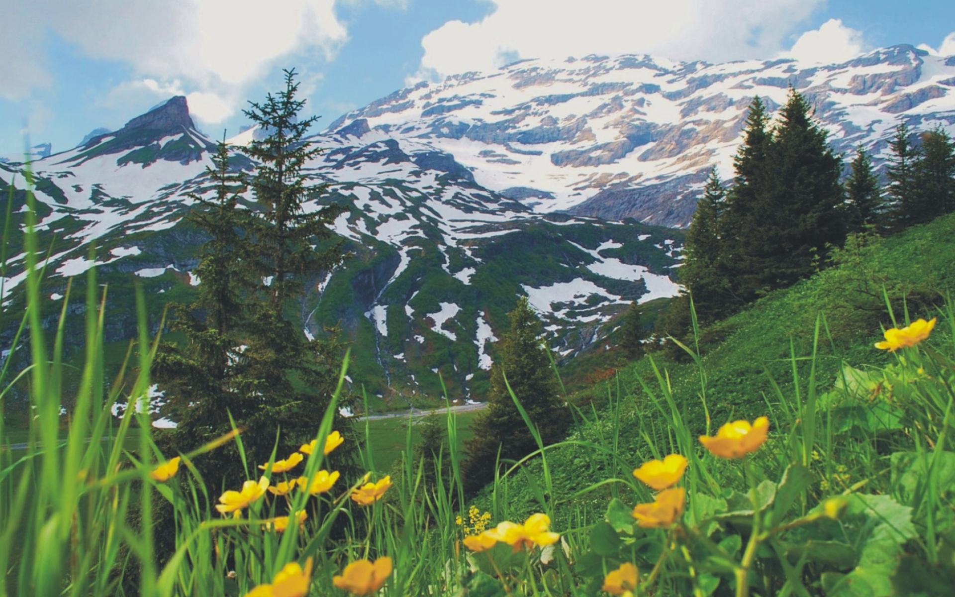 Обои весна в альпах 1920x1200