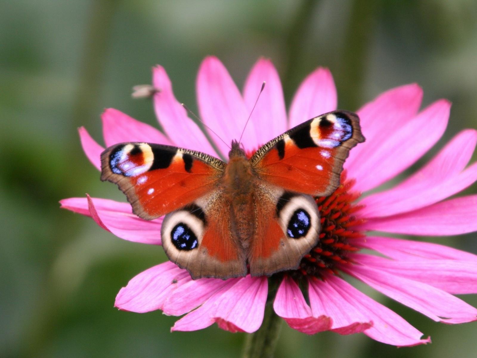 Яркая бабочка на цветке позитивные