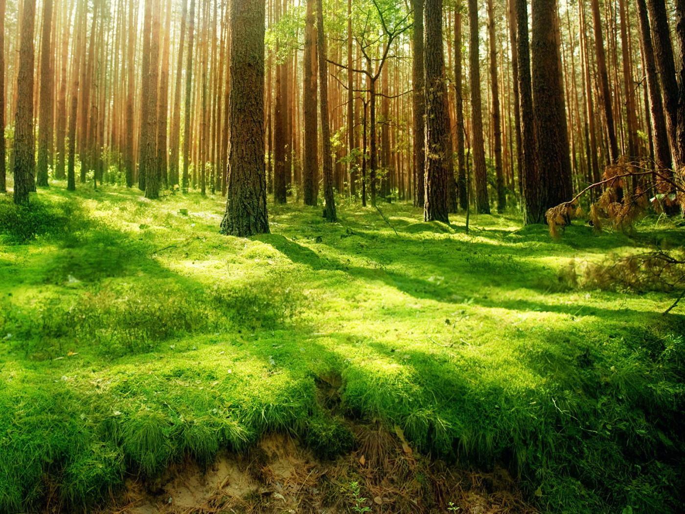 Зелёная трава в лесу обои 1400x1050