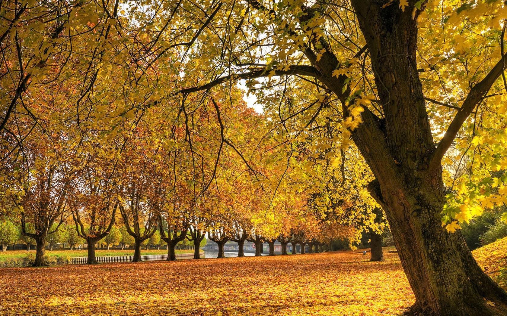 Обои золотая осень в парке 1680x1050